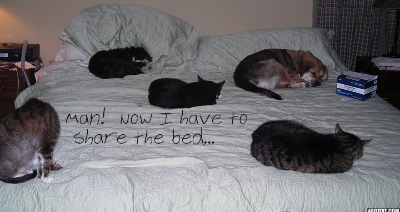 9.6.13 Cats and dog on the bed w text 2.jpg