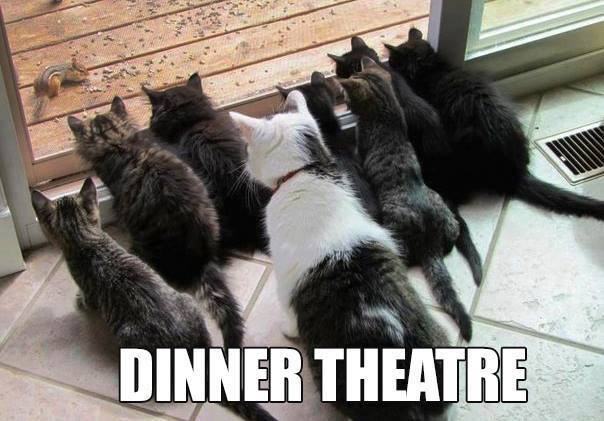 9.6.13 Cats at the Dinner Theatre