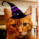 Apricot in witch hat
