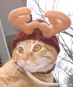 Christmas Cats 2008 Apricot
