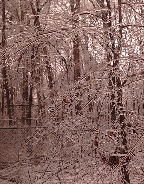 Ice Storm tree closeup